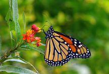 Butterflies / by Cathy Y.