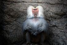 Animals / by Michelle Bonta