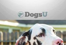Kutya kiképzés