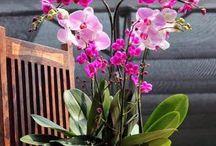 Arranjos de orquídeas!