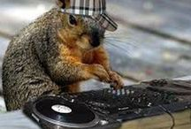 DJ Squirrel in the Mix