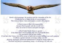 Spirit Animal - Hawk