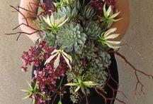 Flowers|Succulents / by Parsonage Events