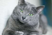 kitties / by Christina Terres