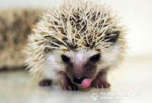 hedgehogs=3