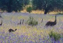 A visit to the ancient Ikara Flinders Ranges National Park