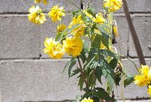 Flowers for my garden