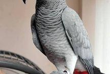 Papağanlar - Parrots