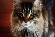 Cats / Lovely, qute animals like Cats and dogs.  Love Cats