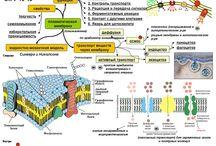 Biology/exam