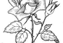 Рисунки Розы