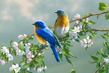 Bluebird... / and some vintage prints and cards / by Mary Beth Elliott