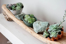 Planter i hjemmet
