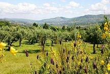 Mountain Beiras / by Hideaway Portugal