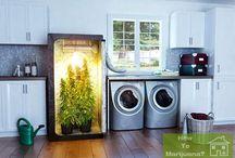 Marijuana kits