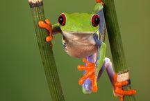 frogggg