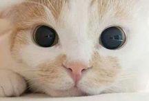 Prrrr  / cat, kawaii, cute