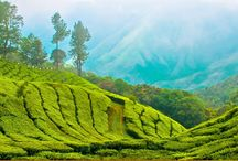 Trek in Northeast India / Discover the travel destinations in North east states and enjoy your trekking in Northeast India