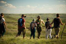 Découvrir la Saskatchewan / Quoi faire en Saskatchewan? Quoi voir? Ici, nous vous donnons une tonne d'idées et de suggestions pour un séjour parfait dans cette belle province du Canada! Découvrez aussi les attraits touristiques et les merveilles de la Saskatchewan.