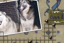 Me & My Pets / Iedere week schrijf ik blogs over mijn avonturen met alle dieren, waarmee ik mijn leven gedeeld heb. Na ruim 25 jaar werken met vooral honden blijft er genoeg stof voor schrijven over! https://memypets.wordpress.com