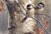pájaros chayo