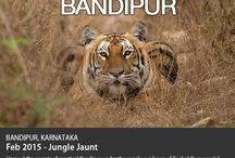 Domestic Wildlife Photo Travel Tour / Some must-do Photography Tours to the hottest wildlife destinations in India.