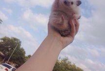 귀여운동물
