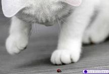 Cute kittens / by Anita Hagen