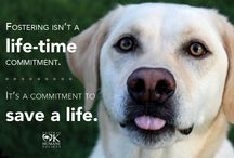 Get involved! / by Central Oklahoma Humane Society
