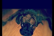 Boxer Dogs <3 / by Leila Micklos