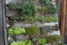 Landscaping: Green Walls