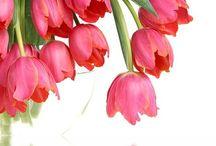 <3 Tulips- Tulipany <3