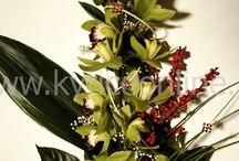 kytica orchidey