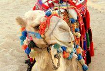 Egitto/marsa alam 2012♡