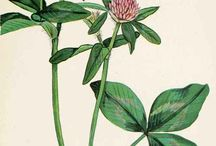 Botanical Prints / by Gayle Brown