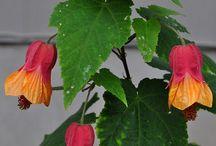 plant list / by Paula Wellings