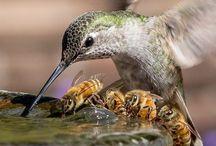 Fotos de colibríes