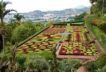Madeira - Gardens