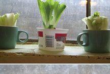 Hage og planter
