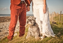 Weddings: Pets