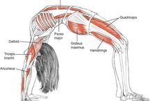 Yoga poses anatomy