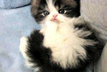 Pretty Kitties ♥