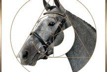 постеры кони