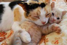 Kitty moms