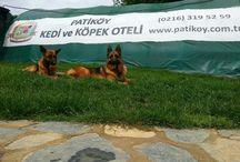 www.patikoy.com.tr