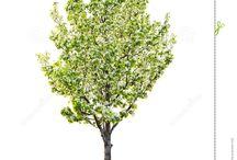 Front Tree
