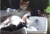 Kitten Child search 2012
