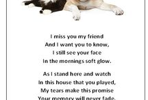 Beloved pets