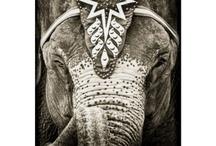 Tattoo Inspirations  / Elephants  / by Whitni Pienezza