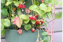 Kitchen & Garden